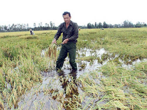 New 'AgRiDOCs' ready to serve rice farming communities